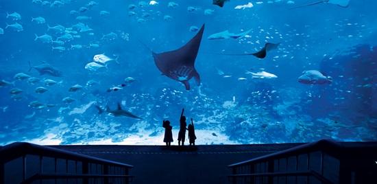 SEAAquarium-OpenOcean