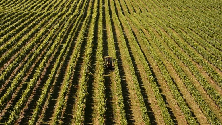 winegrowing-2151463_1280.jpg