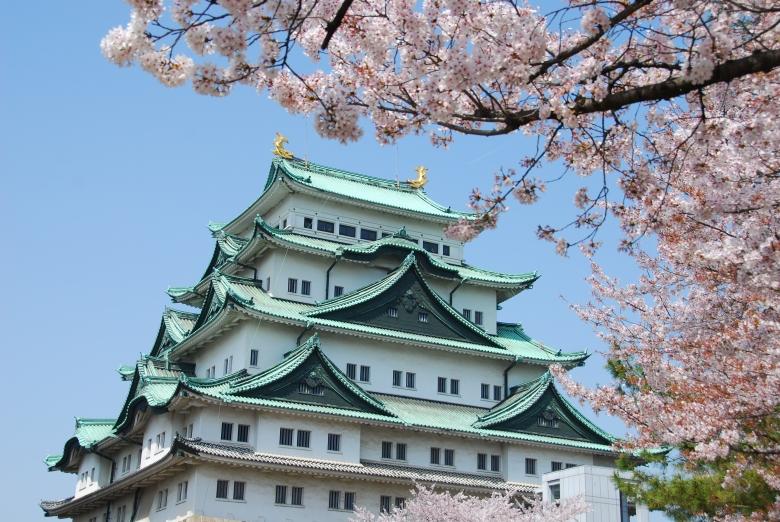 名古屋城櫻花
