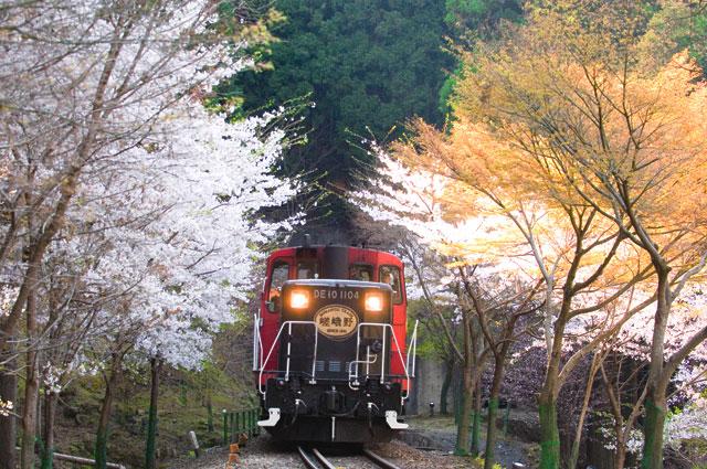 嵐山小火車櫻-2
