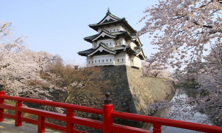 弘前城 - 櫻花